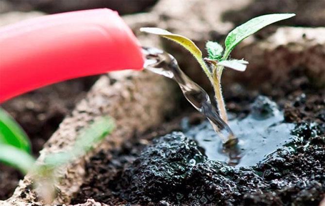 Zastosowanie nadtlenku wodoru do roślin domowych i ogrodowych
