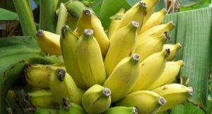 W jakim wieku dziecku można podać banana