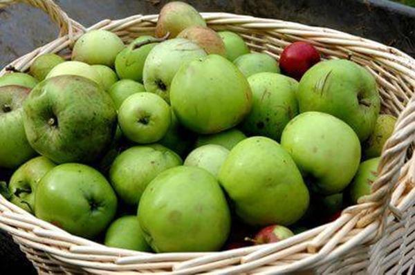 Niedojrzałe jabłka