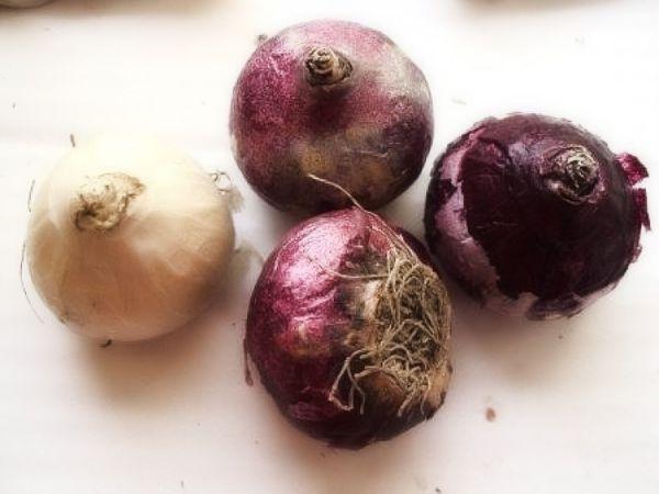 Kiedy jesienią sadzić cebulki hiacyntowe na zewnątrz?