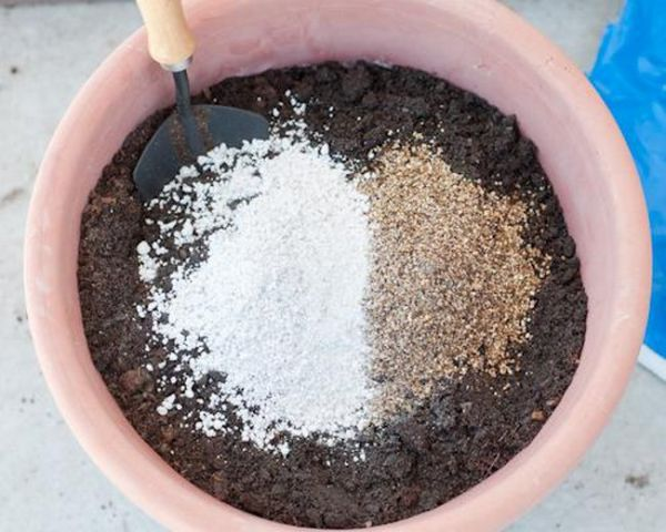 Cechy żywicieli rosnących sadzonek