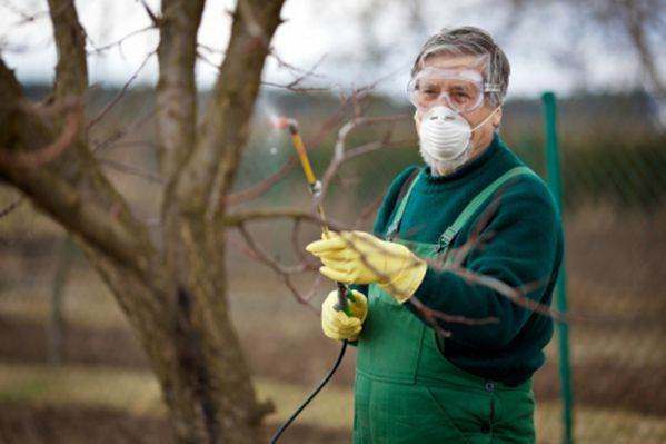 Pielęgnacja jabłoni jesienią i przygotowanie do zimy
