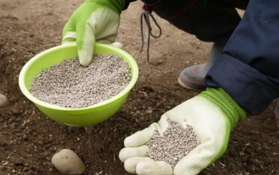 Nawozy do gruszek - dobór nawozów mineralnych i organicznych