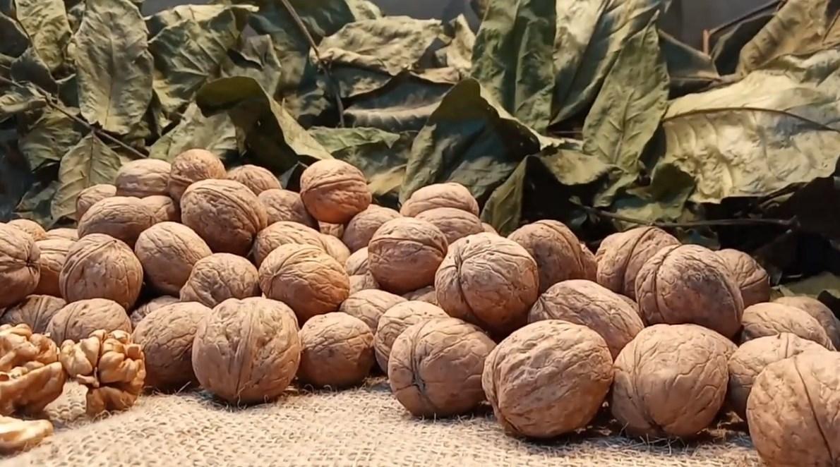 Jak nawozić orzechy włoskie - rodzaje dressingów według sezonu