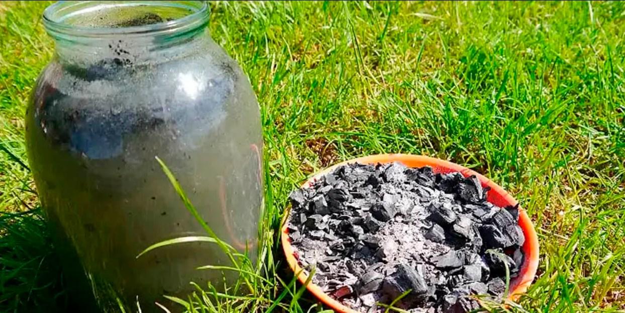 Jak nawozić jesienią rokitnik - mineralny i organiczny