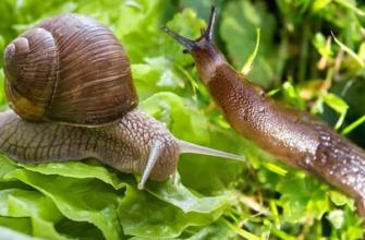 Ślimaki i ślimaki