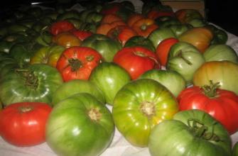 Zbiór brązowych owoców